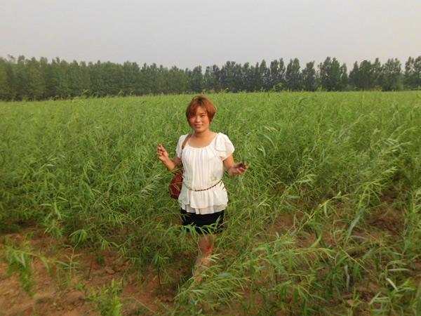 郯城县开源银杏园艺场---中国苗木信息网