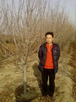 中国苗木信息网