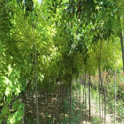 泰山绿城园林苗木基地位于泰山区邱家店镇李家庄 ,占地面积约50