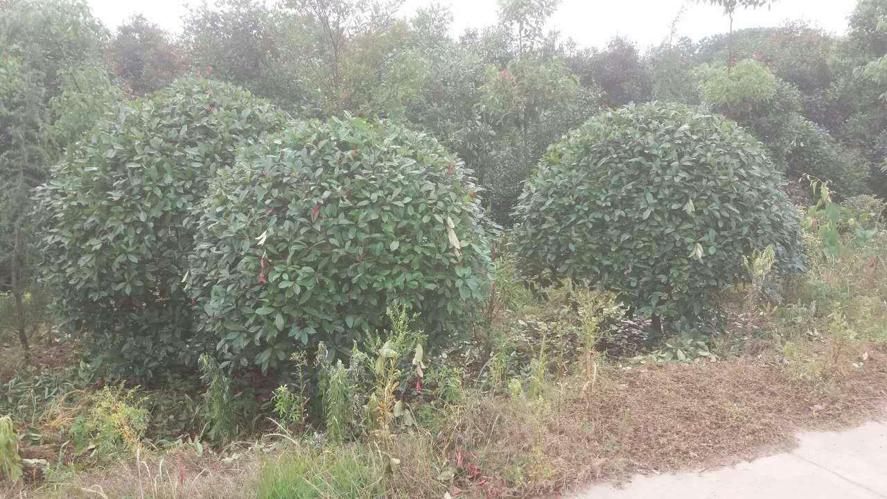 灌木 绿化苗木 苗 苗木 树 植物 1280_720
